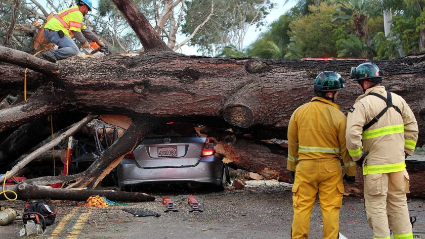 SAN DIEGO_|Firefighters worked to move large tree which fell across all the lanes of Ingraham Stree