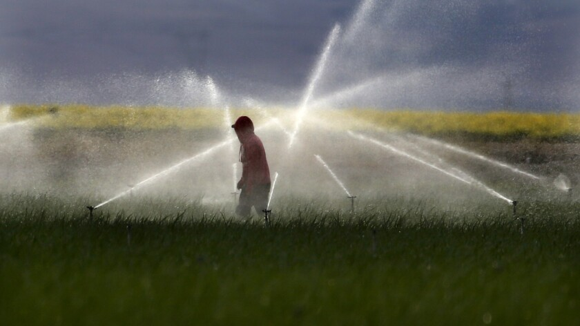 A farmworker adjusts sprinklers at a farm in Mettler, Calif., south of Bakersfield.