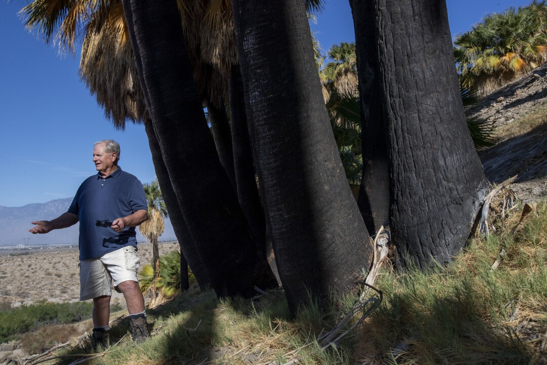 A man stands next to a grove of fan palm trees.