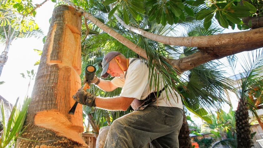 Tim Richards carves an Easter Island head from a palm tree at a Carmel Valley residence.