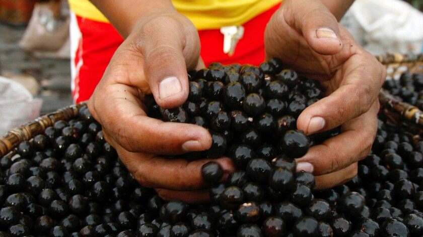A man holds acai berries at a market in Belem, Brazil.
