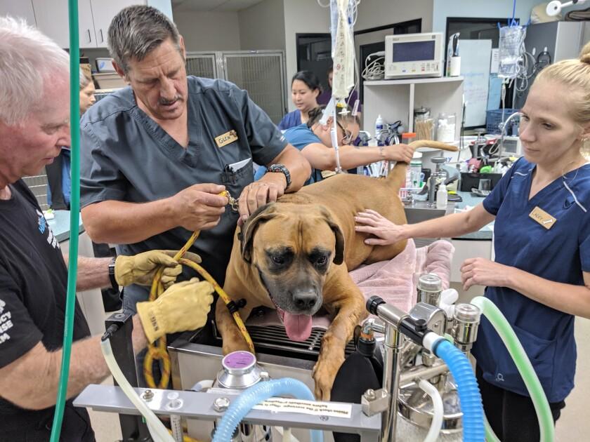 joey medical treatment.jpg