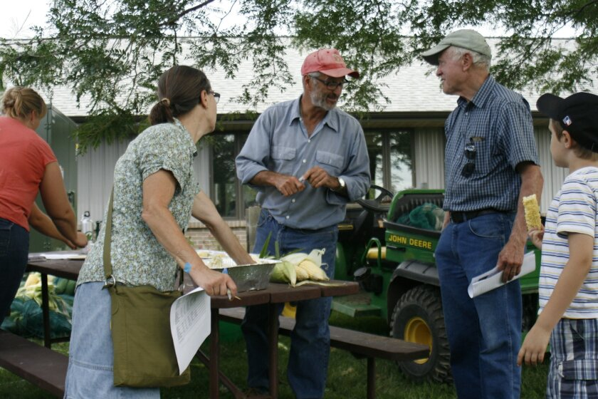 Sweet corn breeder Bill Tracy,center, talks to visitors at a tasting day on a University of Wisconsin research farm Wednesday, Aug. 27, 2014, in Verona, Wis. Tracy is one of several vegetable breeders working with chefs and farmers to develop better-tasting vegetables. (AP Photo/M.L. Johnson)