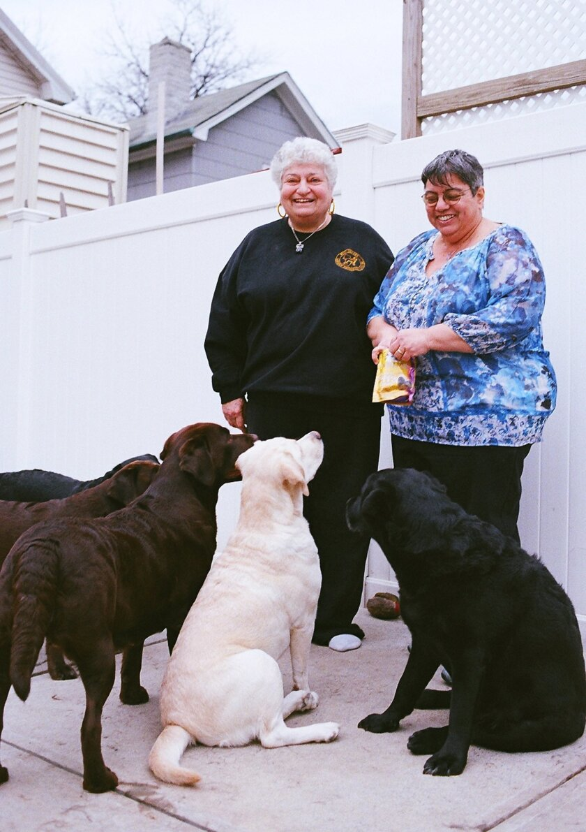 In this Feb. 4, 2016 photo, longtime Labrador retriever breeder Micki Beerman, left, and her wife, Linda Pensabene, give treats to some of the dogs they have bred, at their home in the Brooklyn borough of New York. The retired teachers are among a relatively small number of people who work to breed