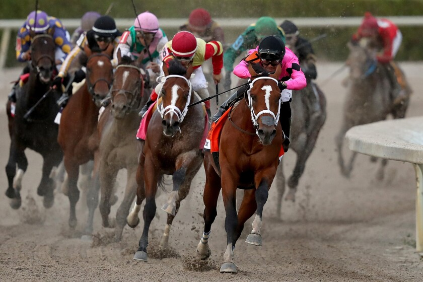 Maximum Security, a lightly regarded horse bought for $16,000, wins 68th Florida Derby