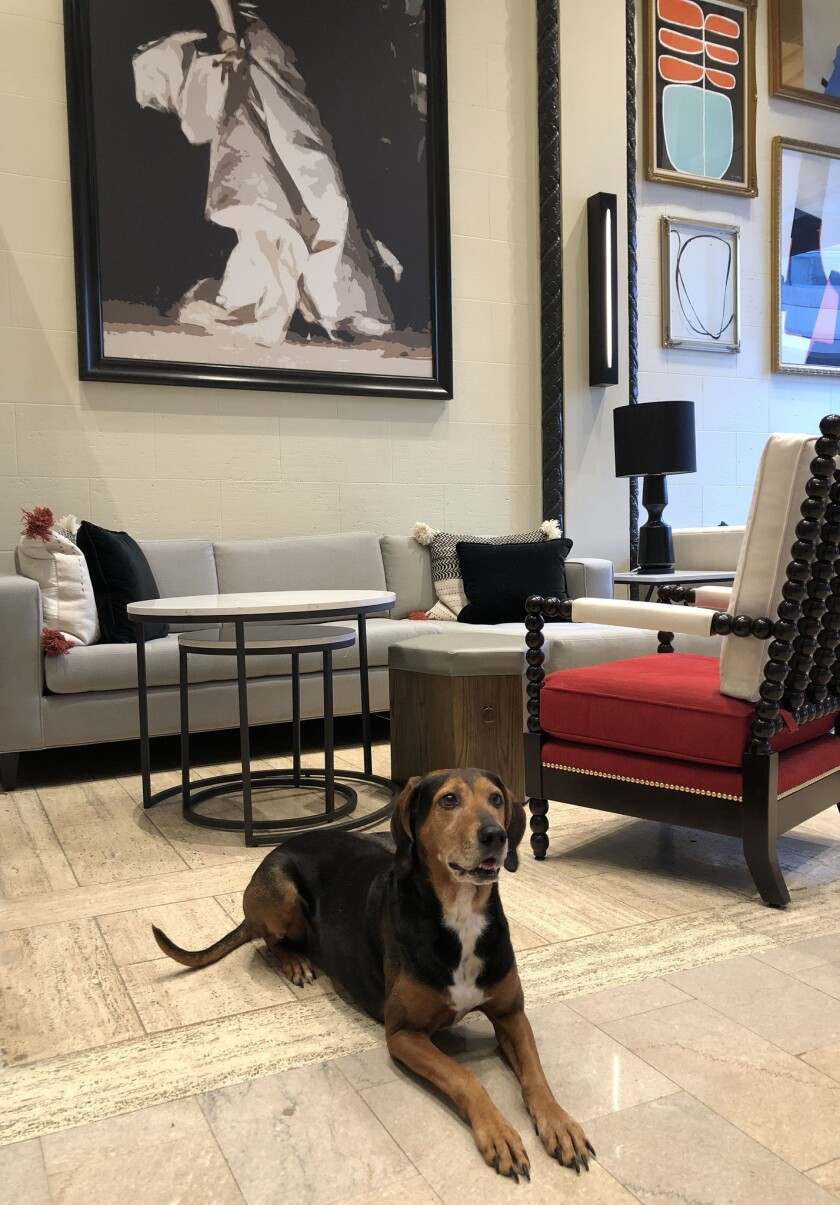 The Hotel Spero encourages guests to leave donated clothing in their room, and for each pet you bring, $5 is donated to the SPCA.