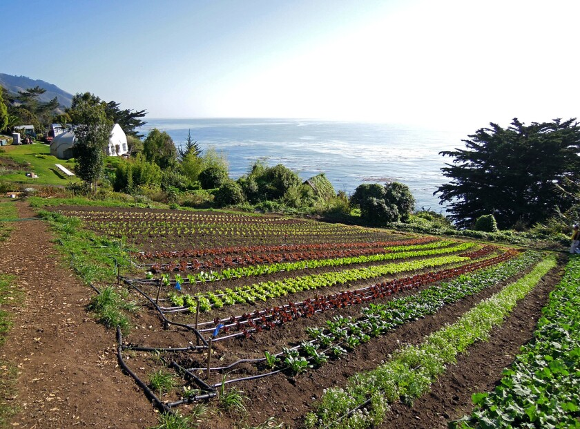 The farm at Esalen Institute which overlooks the Pacific Ocean.