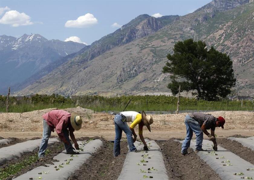 Joven latina crea una app para prevenir las muertes de agricultores por calor