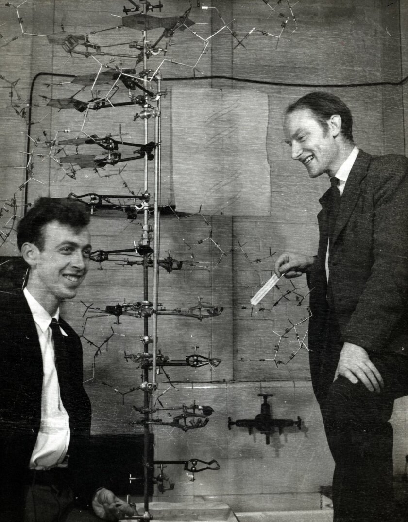 James Watson (left) and Francis Crick discovered the chemical structure of DNA in 1953 at Cambridge University.