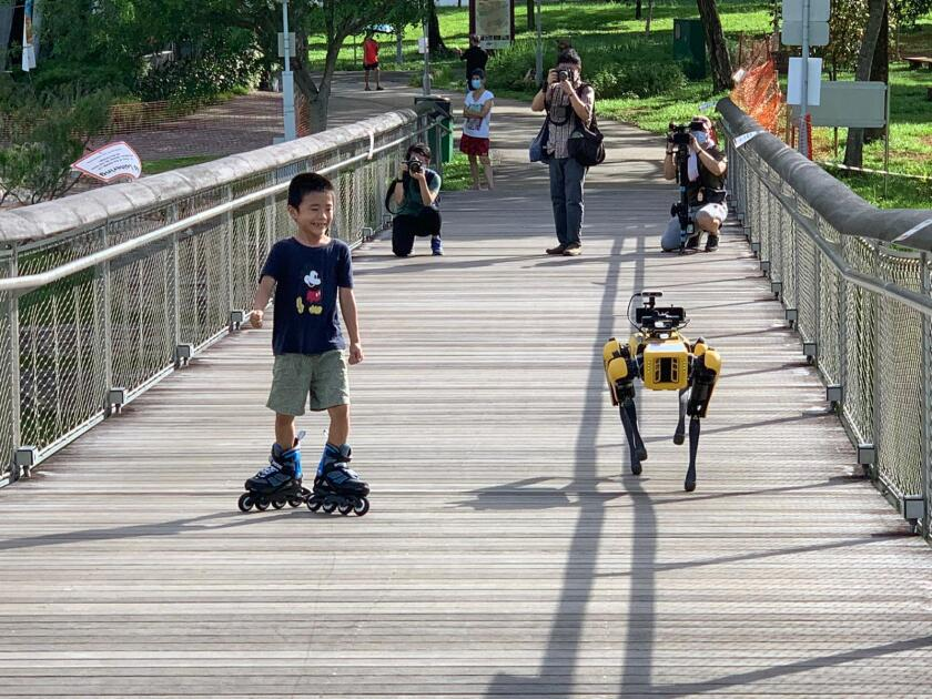 Spot the robot walks through Bishan-Ang Mo Kio Park in Singapore on May 8, the first day of a two-week trial assisting the government's social distancing efforts.