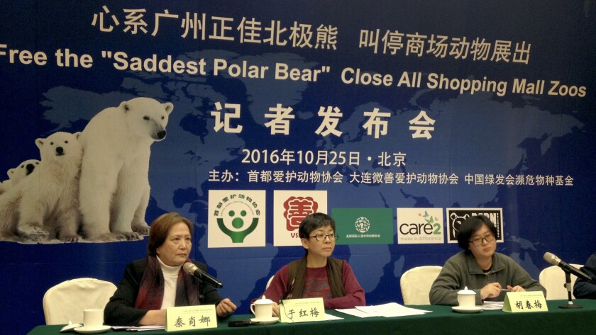 "Representatives from Chinese animal rights groups hold a news conference to speak out against the treatment of Pizza, the ""world's saddest polar bear,"" in Beijing on Oct. 25."