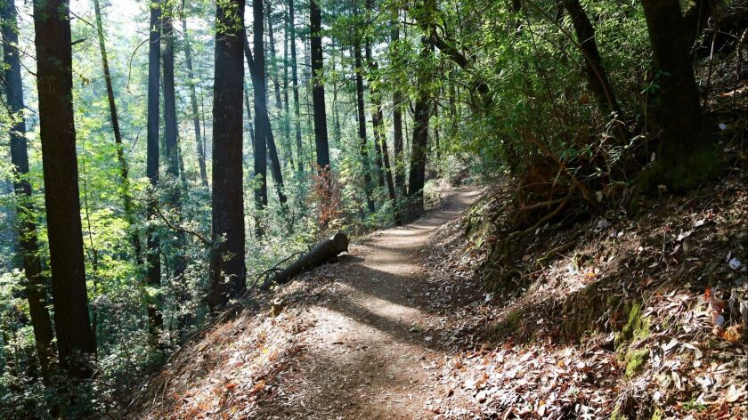 The Robert Louis Stevenson Memorial Trail in Robert Louis Stevenson State Park. The Stevensons spent