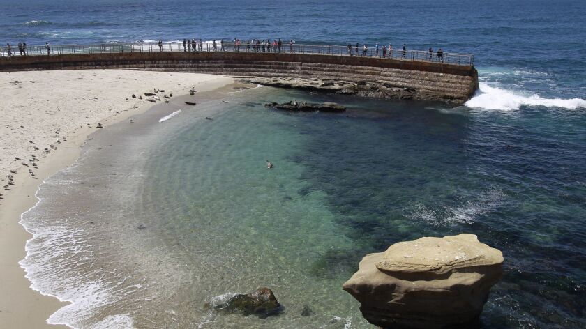 Seals on the beach at the Children's Pool in La Jolla in this photo from May 2017. | Photo by Hayne Palmour IV/San Diego Union-Tribune