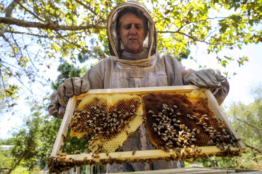 Beekeeper Dave Felker holds a frame from one of his hives that's covered with bees at his Elfin Forest home on Friday..