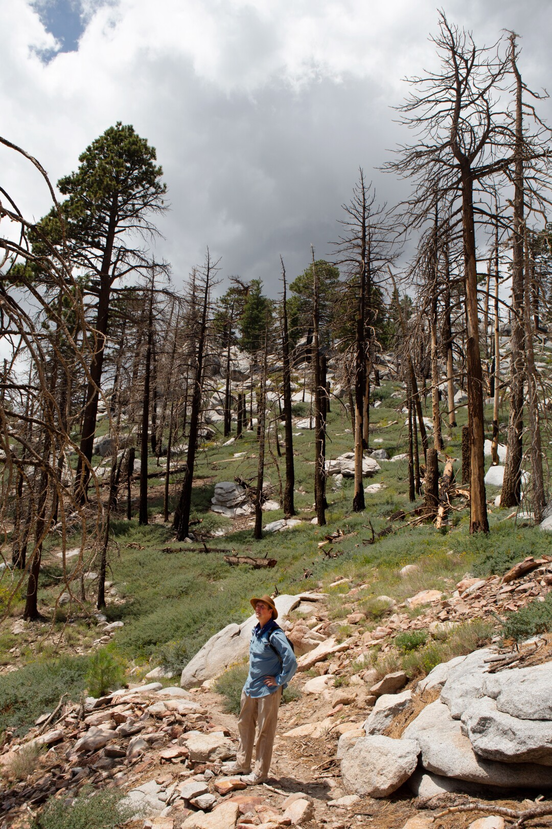 Chad Hanson, ecologist and president of the John Muir Project, examines the burn scar region of the San Jacinto Mountains.
