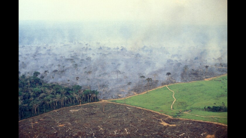 Stages of deforestation in Brazil