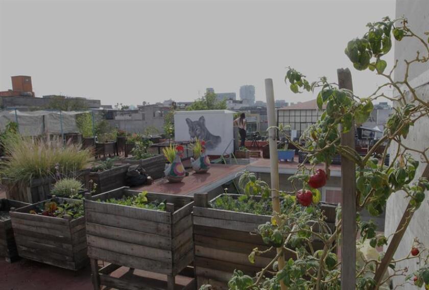 Fotografía que muestra una vista general de huertos urbanos en una azotea en Ciudad de México(México). EFE