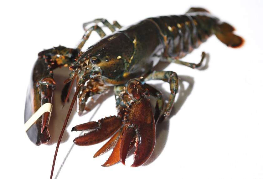 Four-clawed lobster