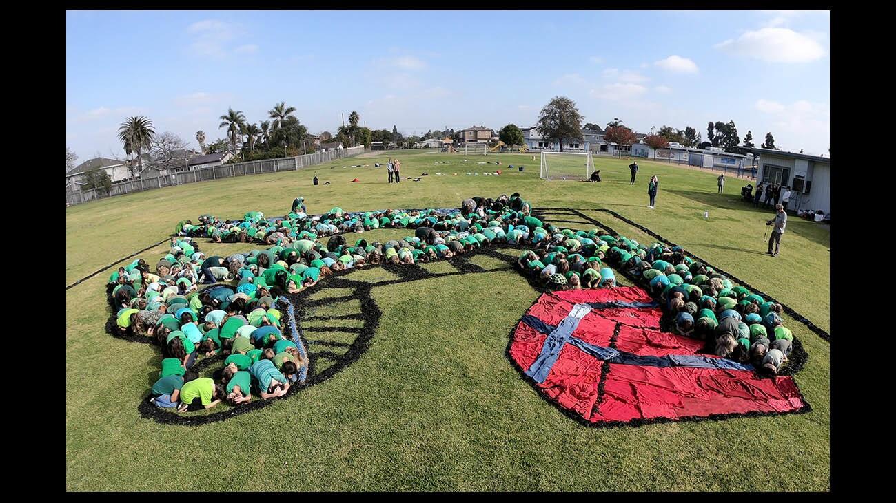 la-woodland-elementary-students-create-living-001
