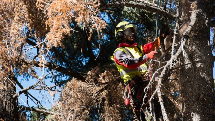 SCE will inspect all trees within 200 feet of its electric facilities and remove or prune trees that