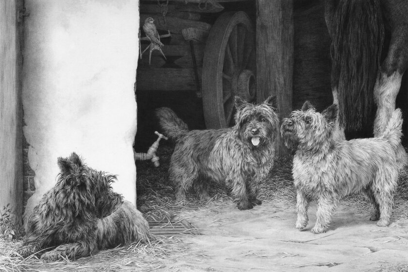 """Barn Patrol,"" featuring cairn terriers (15 inches by 11 inches) by Mike Sibley"