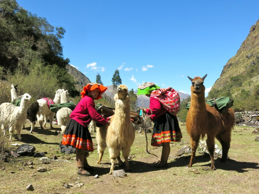 Go trekking with llamas on a full-day hike in Peru's Sacred Valley.