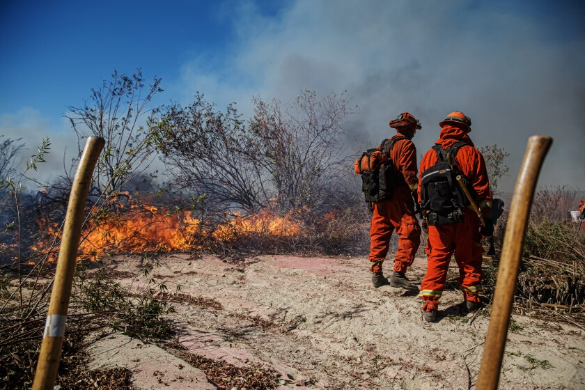 Inmate firefighters work to slow down the spread of the Maria fire