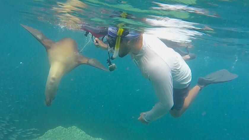 Sea lion, Los Islotes, Isla Espiritu Santo, Baja California Sur.