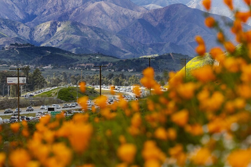 LAKE ELSINORE, CA - MARCH 9, 2019: The super bloom creates a super traffic jam along the 15 freeway