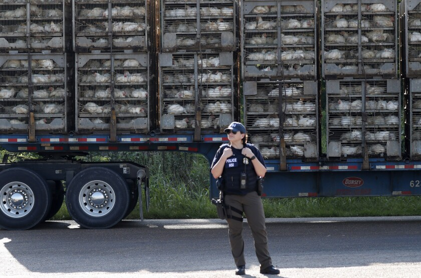 Immigration agents arrested 680 suspected unauthorized workers at seven poultry processing plants in Mississippi last week.