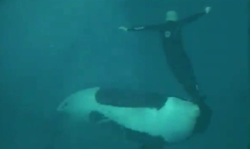 A screen capture from a 2006 video showing a SeaWorld San Diego trainer being dragged under water by a killer whale.