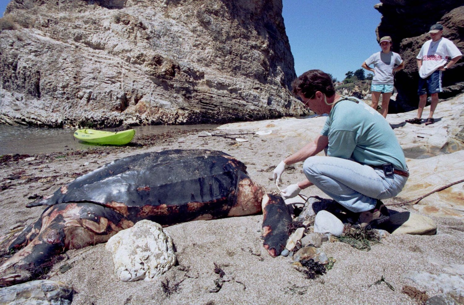 California is moving to protect the leatherback turtle