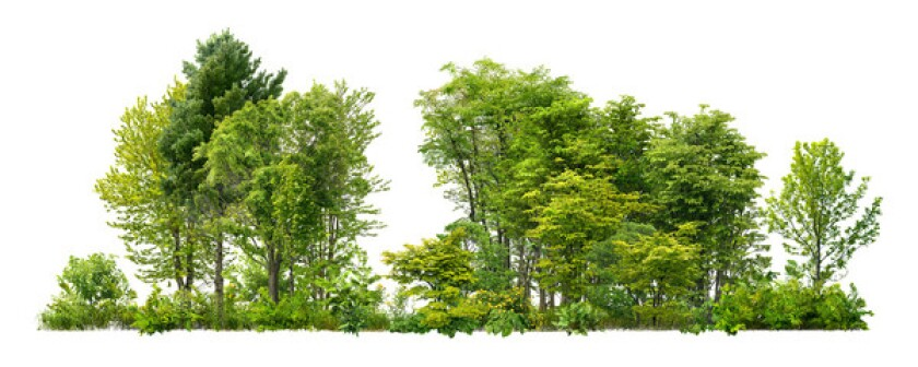 Stock photo of trees