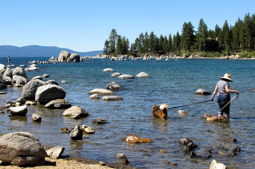 A women cools down with her two dogs in Lake Tahoe at Zephr Cove.