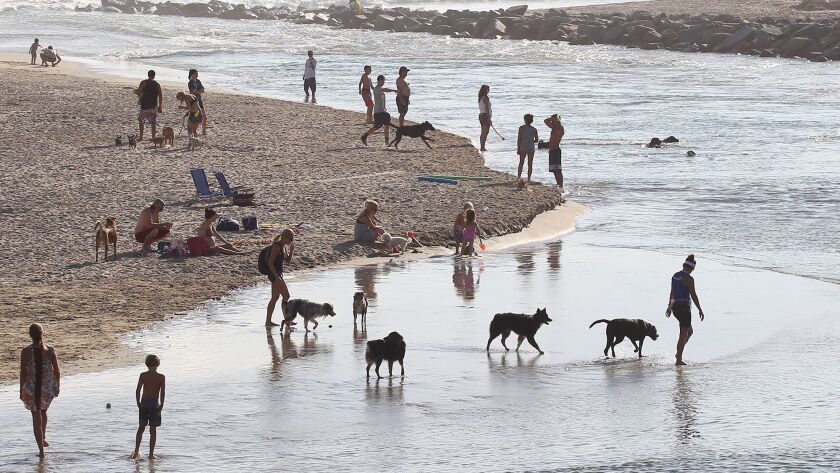 """A stretch of county-controlled beach near the mouth of the Santa Ana River has long been a de facto off-leash """"dog beach."""""""