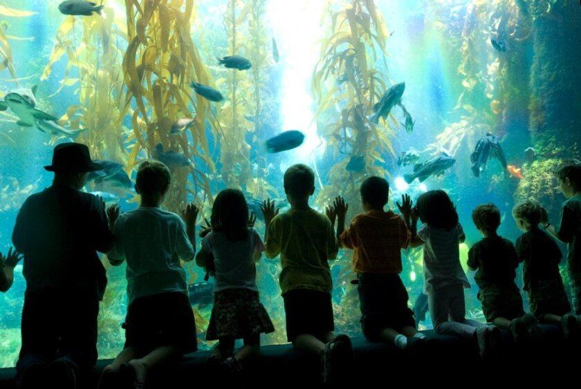 The kelp forest is one of the biggest draws at the Birch Aquarium, which drew more than 441,000 customers last year.