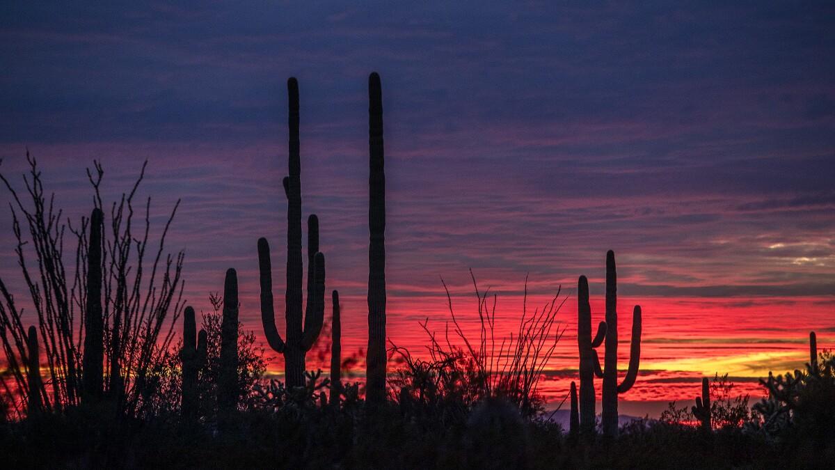 493968-border-wall-saguaro-2-BRV.jpg