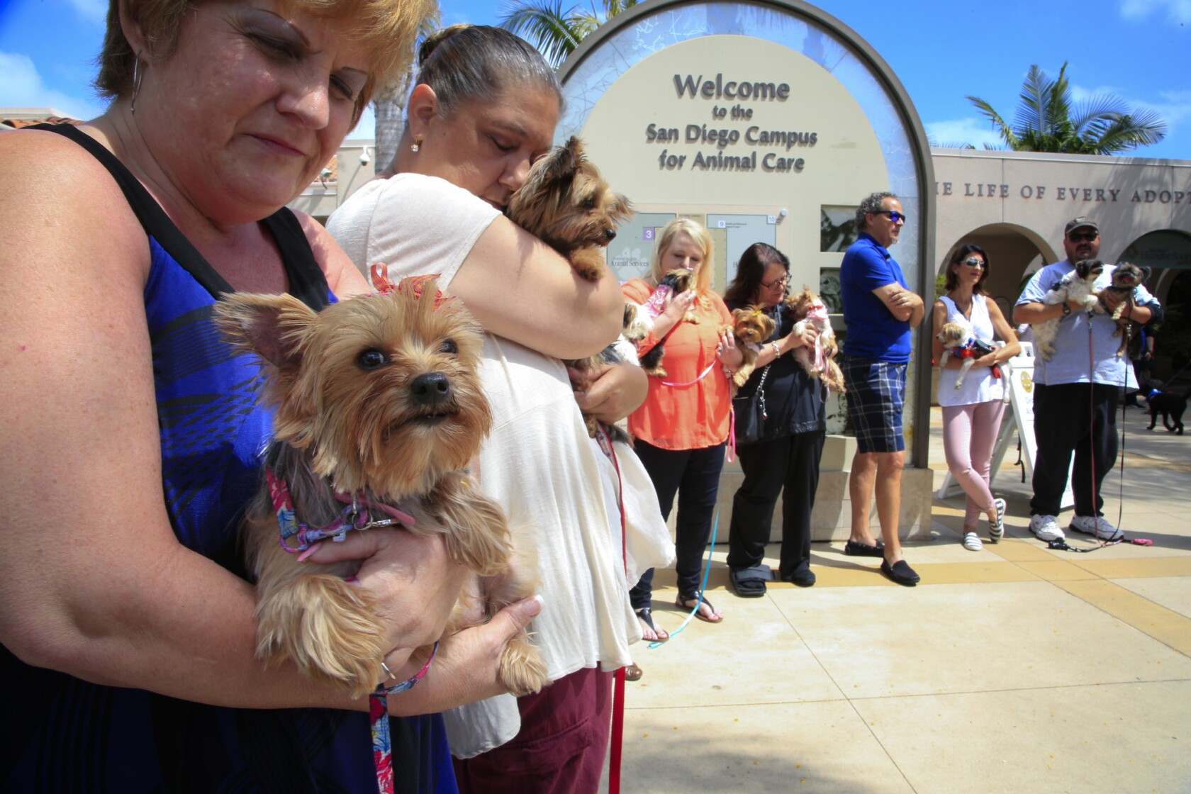 Scores of rescued Yorkies seized from fetid home enjoying
