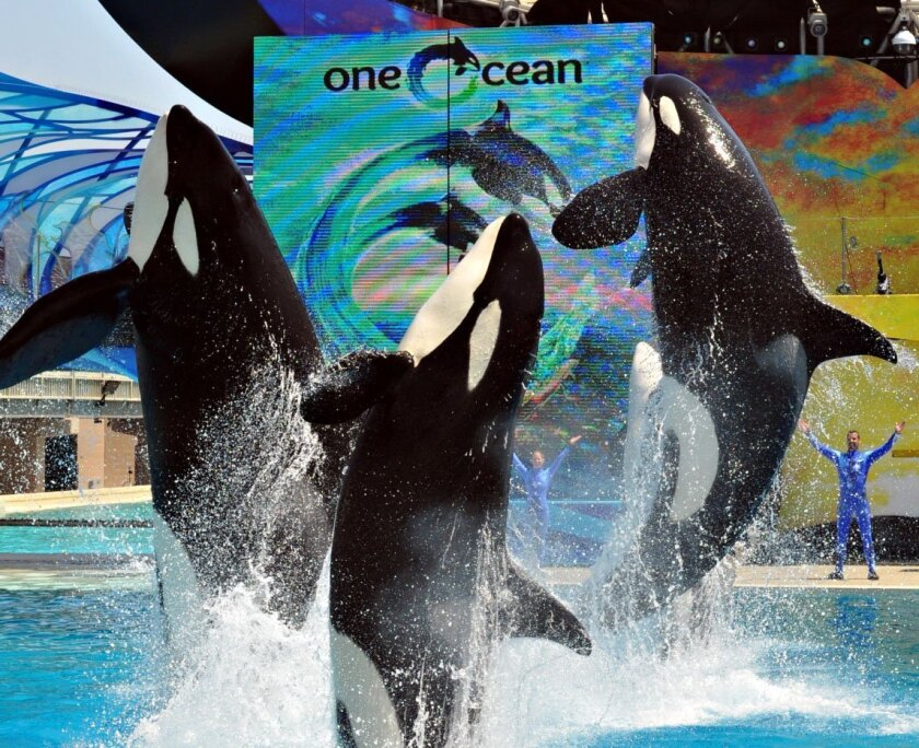 The new Shamu show, One Ocean, will officially debut Memorial Day weekend.