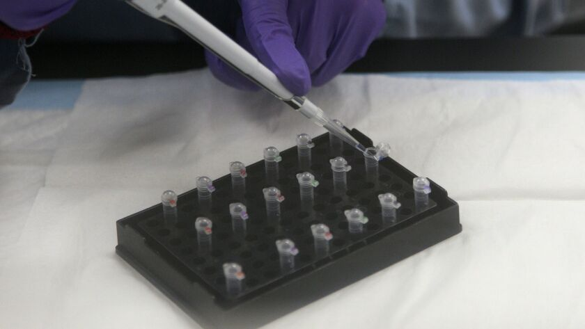 A lab technician works on mitochondrial DNA testing.