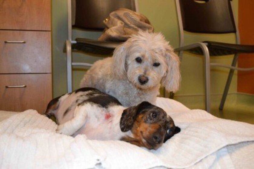 Heiny and Lily find comfort in one another. Courtesy photo