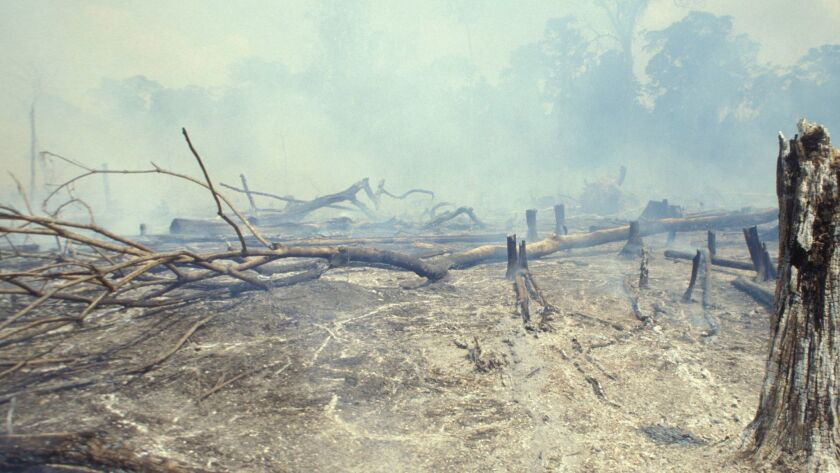Part of the Amazon rain orest is burned to clear land for cattle raising in Acre state, Brazil.