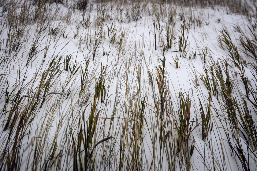 Grass is bent by the wind during the first snowfall of the winter season on Thursday, Oct. 10, 2019, in Meade County, S.D. A powerful winterlike storm moving through the Great Plains was closing schools and causing travel headaches in several states, authorities said Thursday. (Adam Fondren/Rapid City Journal via AP)