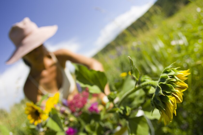 Woman gardening flowers, Idaho.