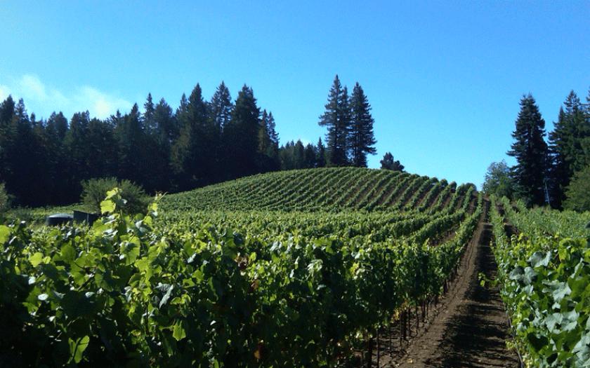 Soliste vineyard