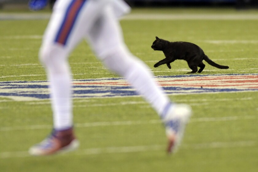 A cat runs on the field during the second quarter of the game between the New York Giants and the Dallas Cowboys on Nov. 4 in East Rutherford, N.J.