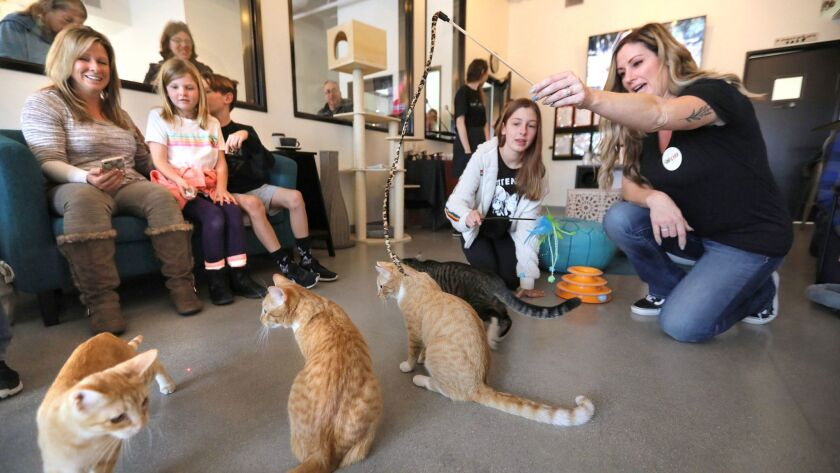 Cats get attention at Cat Craft. At right are volunteers Heather Thomas and her daughter Keely Thomas, 13. At left are visitors.