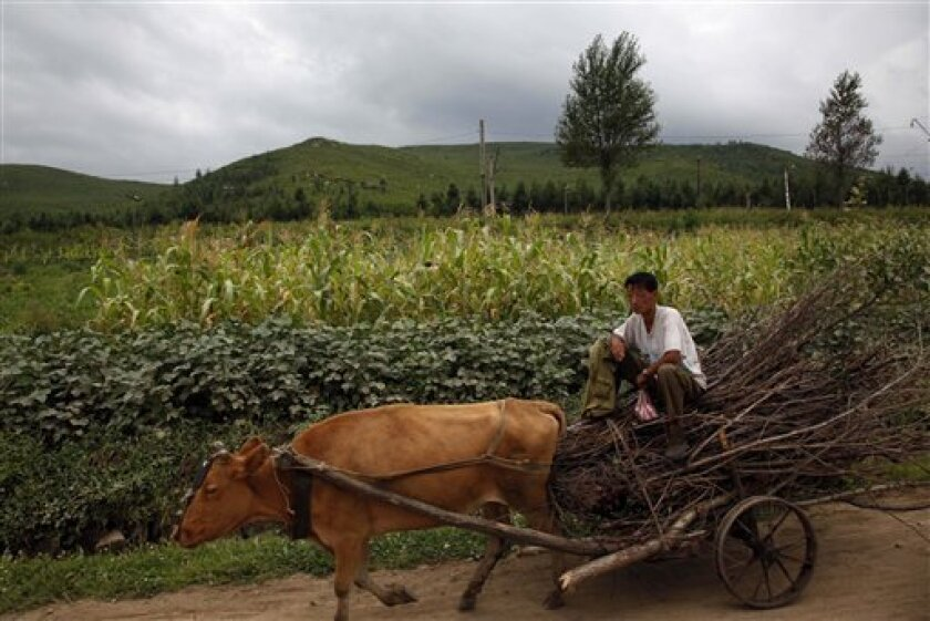 In this photo taken Monday, Aug. 29, 2011, a North Korean man sits top of a cart pulled by an ox on the road from the Wonjong border crossing to Rason city, North Korea. Rason, the special economic zone, lies in the far northeastern tip of North Korea, 1,000 kilometers (600 miles) from Pyongyang. (AP Photo/Ng Han Guan)