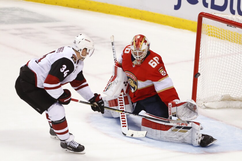 Coyotes Panthers Hockey