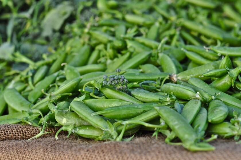 Sugar snap peas at the Culver City farmers market.